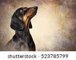 Drawing Dog Breed Dachshund...