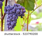 Grape Seeds Surrounded By A...