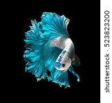 turquoise dragon siamese... | Shutterstock . vector #523823200