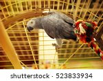 Small photo of African gray parrot in cage, close up view