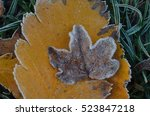 Small Brown Frozen Leaf On...