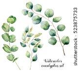 watercolor eucalyptus set. hand ... | Shutterstock . vector #523875733