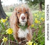 dog with dafodils