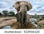 beautiful images of of african... | Shutterstock . vector #523936120