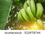 Bunch Of Banana On Tree.