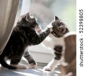 Stock photo two fighting young cats 52398805