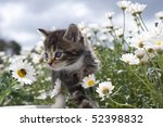 Stock photo cat baby between blooms observes bee 52398832