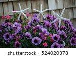 purple flowers in a pot | Shutterstock . vector #524020378