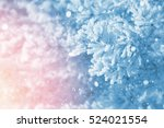 winter bright background.... | Shutterstock . vector #524021554