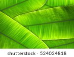 The Leaves Of The Banana Tree...