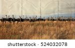 Beautiful Photo Of A Herd Of...