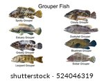 Grouper fish set,marine fish types,fish collection on white background,estuary grouper,Malabar rock cod,cloudy grouper,leopard grouper,spotty grouper,greasy grouper,duskytail grouper,sixbar grouper