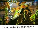 Aquarium Cichlid Exotic Fish....