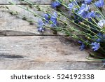 chicory flowers | Shutterstock . vector #524192338