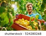 friendly farmer at work in...   Shutterstock . vector #524280268