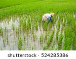 Balinese Farmer Working In A...