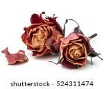 dried rose flower head isolated ... | Shutterstock . vector #524311474