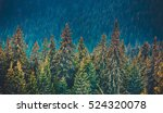 majestic pine tree forest at... | Shutterstock . vector #524320078