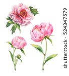 set of watercolor pink peonies | Shutterstock . vector #524347579