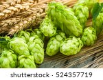 green hops  malt  ears of... | Shutterstock . vector #524357719