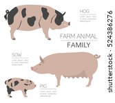 pig farming infographic...   Shutterstock .eps vector #524386276