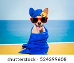 chihuahua dog relaxing  with... | Shutterstock . vector #524399608