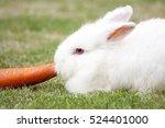Stock photo new zealand white rabbit eating carrot on green grass 524401000