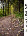 forest road. fall landscape... | Shutterstock . vector #524417458