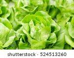 Lettuce Hydroponics Vegetables...