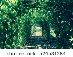 Green Tunnel In Fresh Spring...