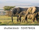 African Elephants On The Masai...