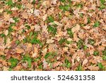 Texture Of Fallen Oak Leaves...