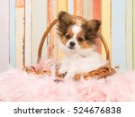 cute papillon puppy in a wicker ... | Shutterstock . vector #524676838