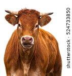 adorable cow portrait on white... | Shutterstock . vector #524733850