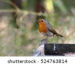 robin | Shutterstock . vector #524763814