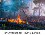 forest fire. fallen tree is... | Shutterstock . vector #524812486