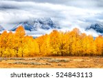 Autumn Colored Trees In Golden...