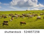 Group Of Cows Eating Grass On ...