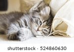 Beauty Brown Little Cat Of...