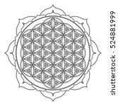 contour monochrome design... | Shutterstock . vector #524881999