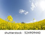 rape field | Shutterstock . vector #524909440