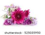 Purple Chrysanthemum And...