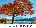 Mount Fuji With Beautiful Mapl...