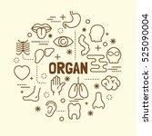 organ minimal thin line icons... | Shutterstock .eps vector #525090004