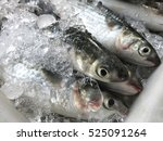 Fresh Gray Mullet Fish At The...