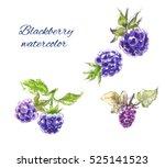 blackberry watercolor | Shutterstock . vector #525141523