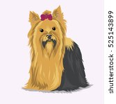 yorkshire terrier dog at one... | Shutterstock .eps vector #525143899