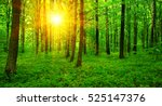 forest with sunlight. the sun... | Shutterstock . vector #525147376