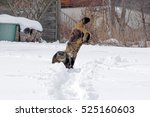 Stock photo two cats play and jump happily in the snow 525160603
