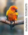 A Brightly Colored Parrot  Sun...